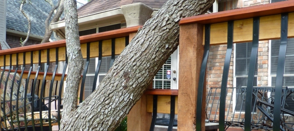 Archadeck built this deck to work with the mature trees in this yard